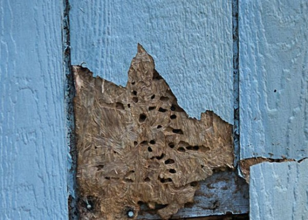 Signs Your Siding Has Insect Damage